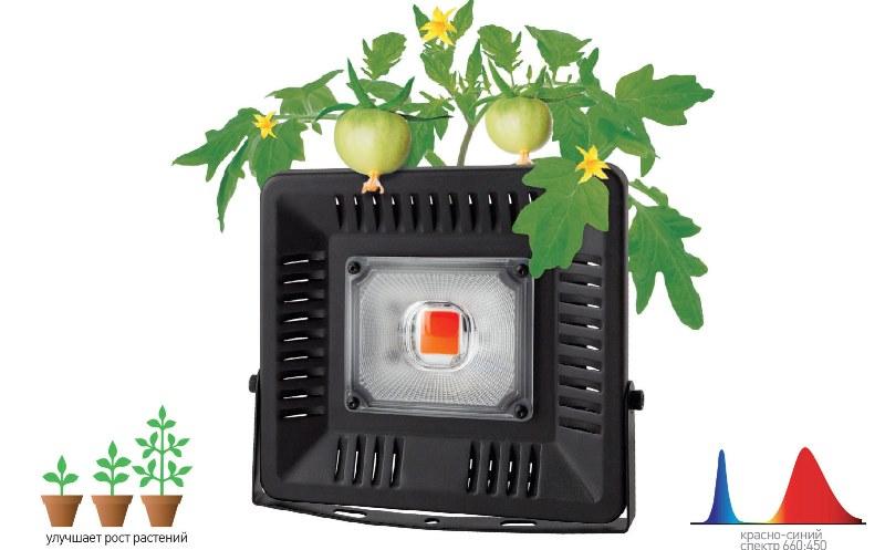 Фитопрожекторы для теплиц