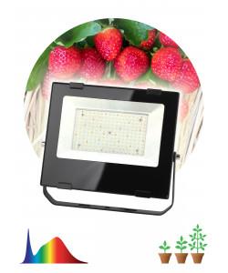 FITO-100W-Ra90-LED ЭРА ФИТО прожектор для  цветения и плодоношения (10/240)