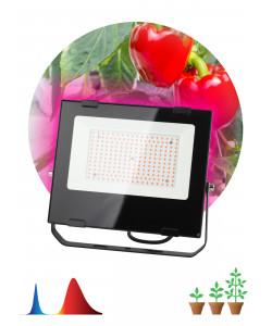 ЭРА Прожектор красно-синего спектра FITO-100W-RB-LED (10/160)