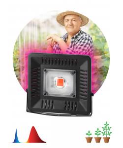 ЭРА Прожектор красно-синего спектра FITO-50W-LED BLUERED (20/420)