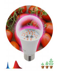 Фитолампа для растений светодиодная ЭРА  FITO-10W-RB-E27 красно-синего спектра