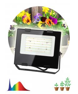FITO-50W-Ra90-LED ЭРА для  цветения и плодоношения (10/300)