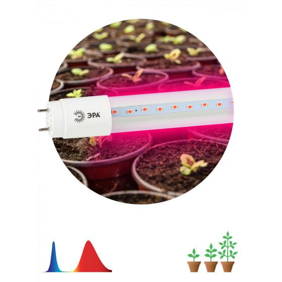 Фитолампа для растений светодиодная ЭРА FITO-9W-RB-Т8-G13-NL красно-синего спектра 9 Вт Т8 G13