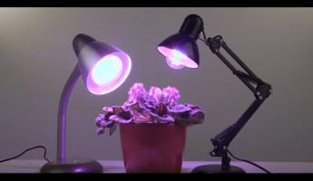 Эра официальный сайт светильники лампы